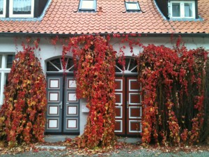 Autumn in Europe (Greifswald, Germany)